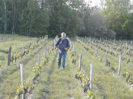 Michel Augé works in vines