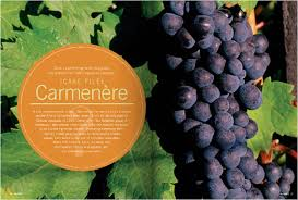 Carmenère by winesofchile.org